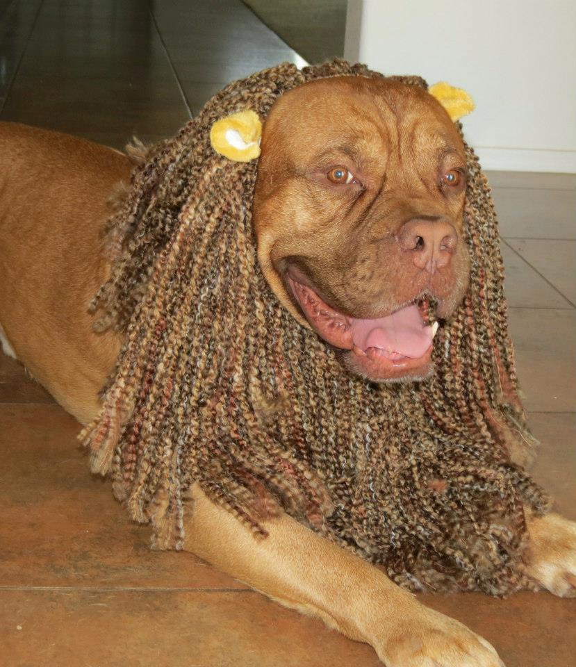Bob Marley Halloween Costume